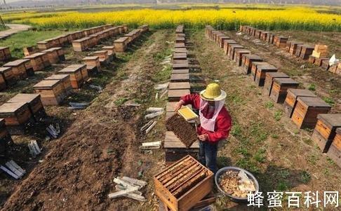 山东4家企业蜂蜜产品抽检不合格