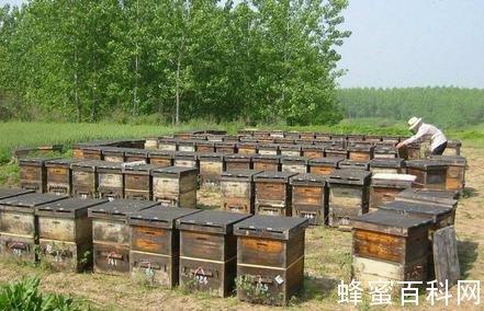 泰安一批次洋槐蜂蜜抽检不合格