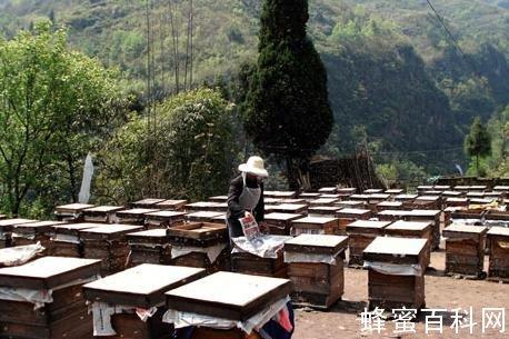 哈萨克斯坦计划向中国出口蜂蜜