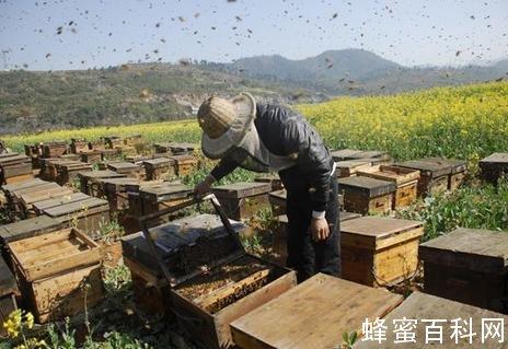 选蜂蜜不必纠结选于种类 路边土蜂蜜未必安全