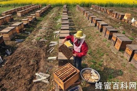 """苏昌鹏:水白蜜是我国蜂蜜出口的一股""""清流"""""""